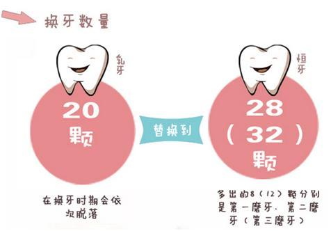 寶寶乳牙一共有多少顆?