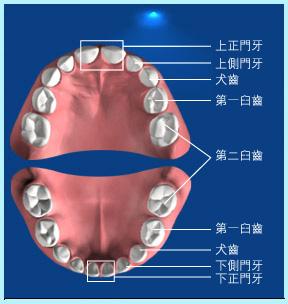 牙齒問題引發的疾病